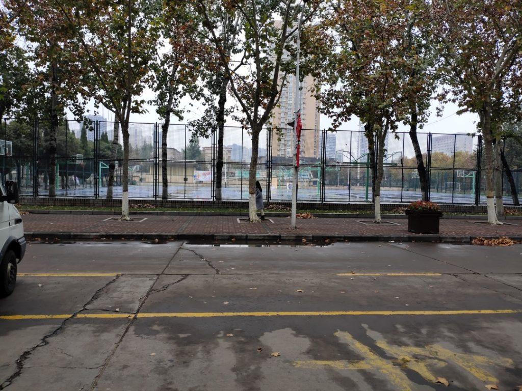 落叶后的校园路面