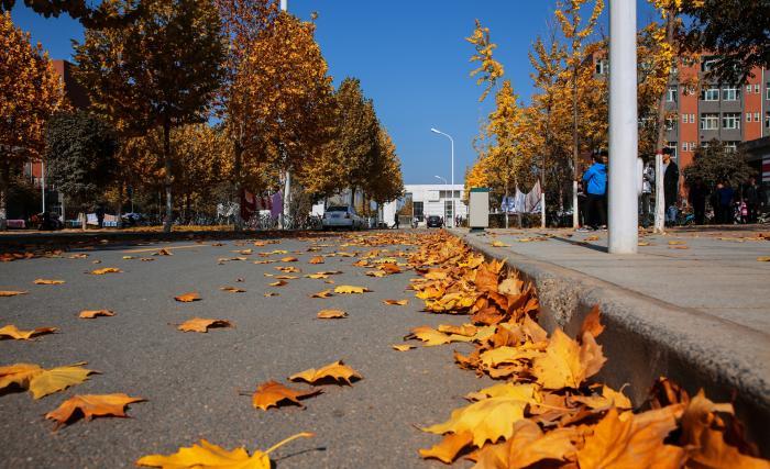 未清扫的校园路面
