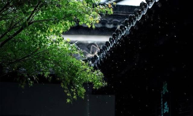 【芒种】连雨不知春去一晴方觉夏深——清晨雨